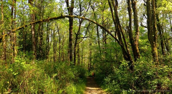 Beautiful Puget Loop Trail