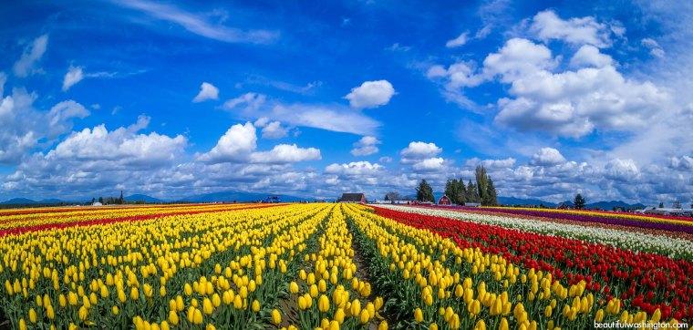 Image: Beautiful Washington