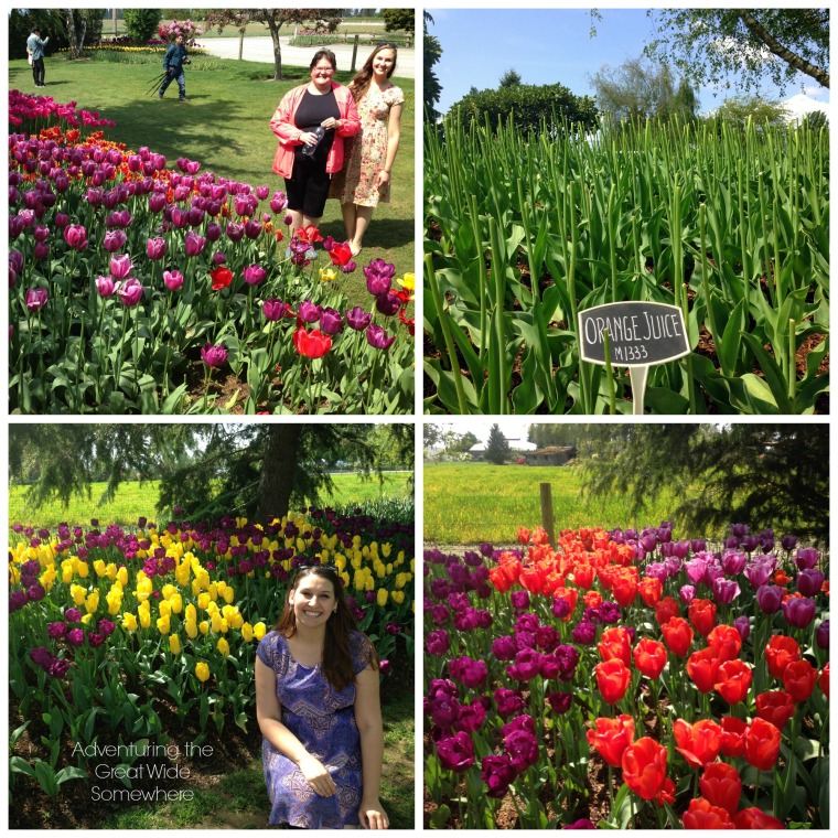 The Skagit Valley Tulip Festival