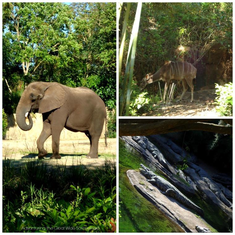Animal Sightings on Kilimanjaro Safaris