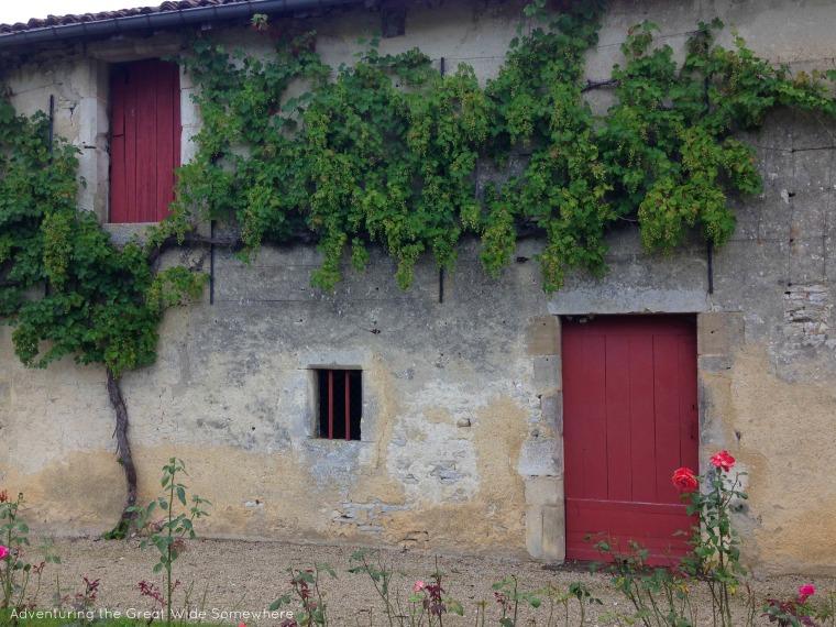 Grape Vines Covering the Chateau de Gudanes in France
