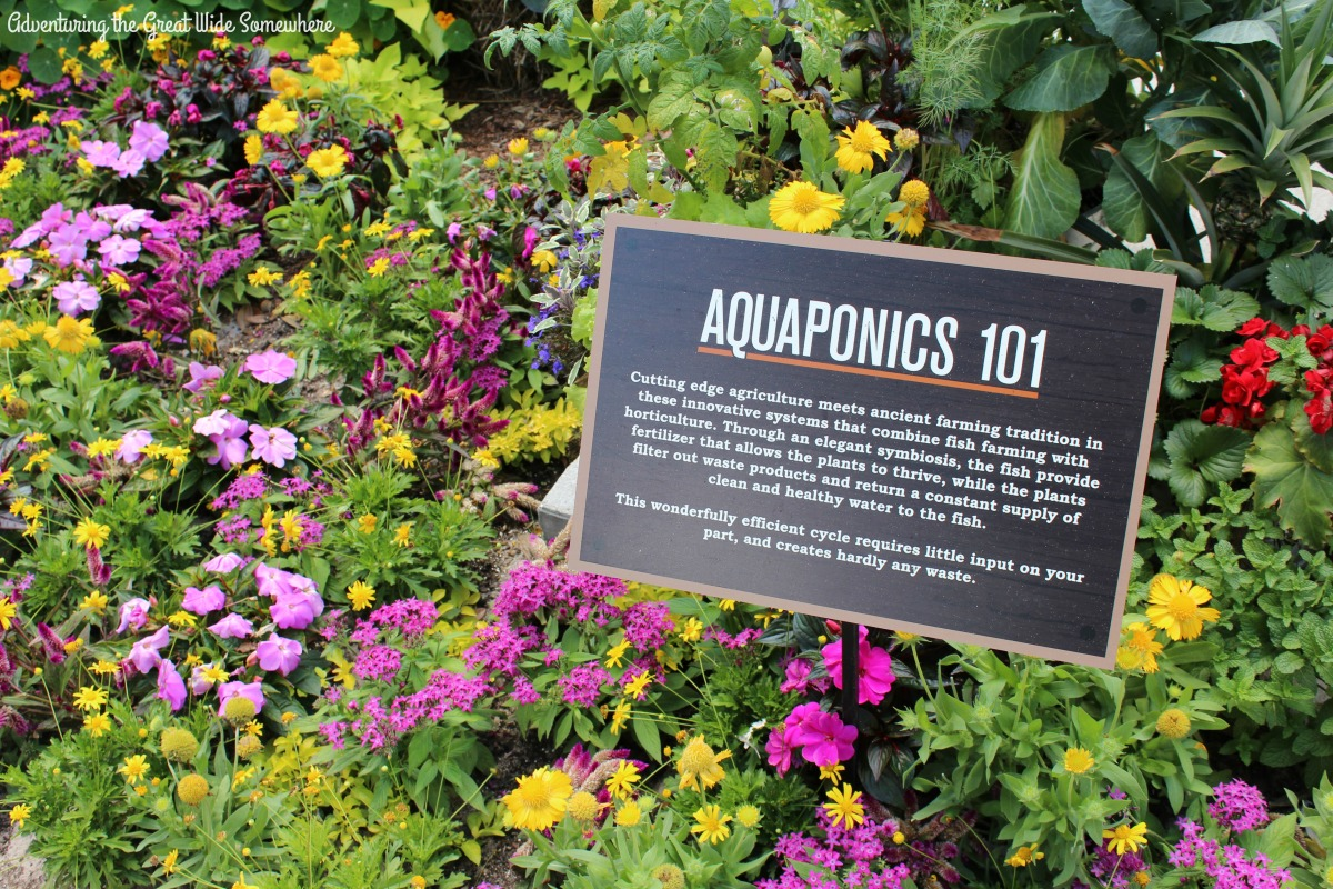 Aquaponics 101 Sign at Epcot's Urban Farm Eats Booth