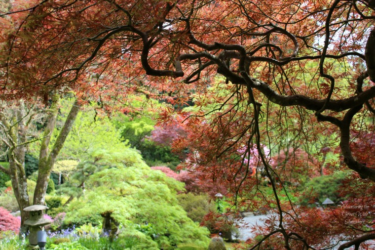 Fall Colors Abound at Butchart Gardens' Japanese Gardens
