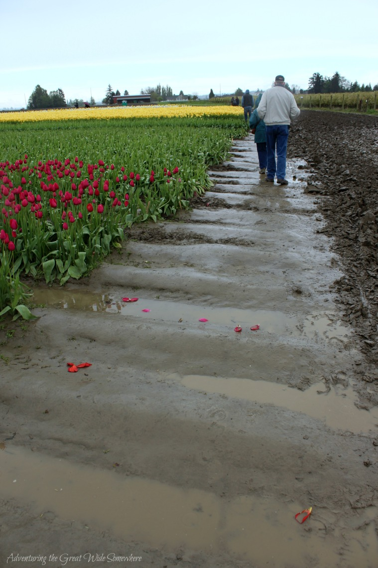 Muddy, Slippery Fields at Skagit Valley's Tulip Town 2016