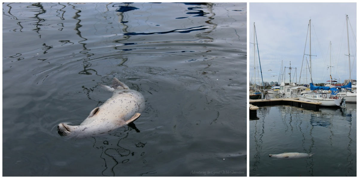 My Spirit Animal, a Lazy Seal on his Back at Fisherman's Wharf, Victoria B.C.